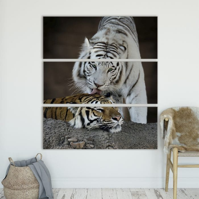 Albino Tiger - Beautiful Home Décor | Unique Canvas