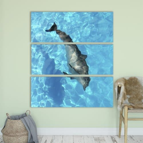 Playful Dolphin - Beautiful Home Décor | Unique Canvas