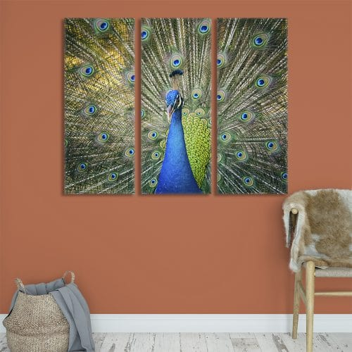 Majestic Peacock - Beautiful Home Décor | Unique Canvas
